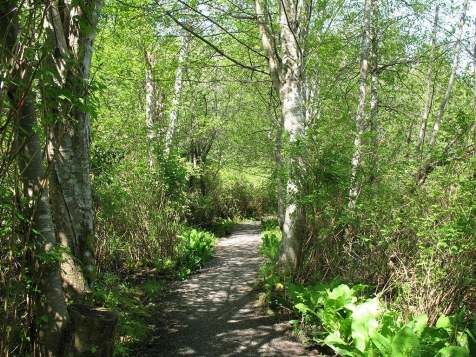 2 Bowen forest walk