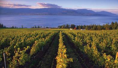 3 Victoria vineyard