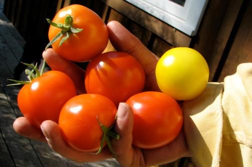bowen-island-tomatoes